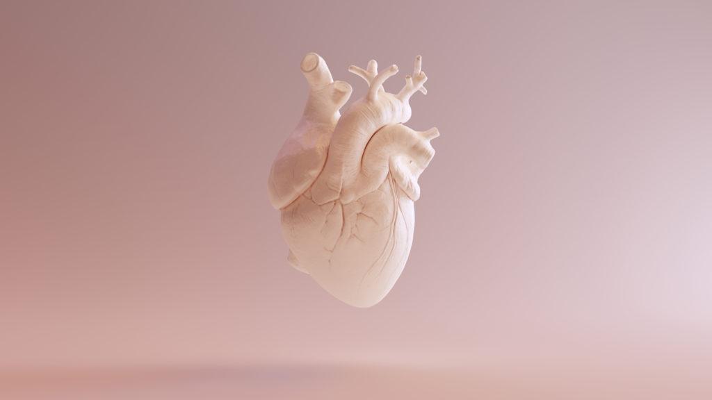 human anatomy exhibition