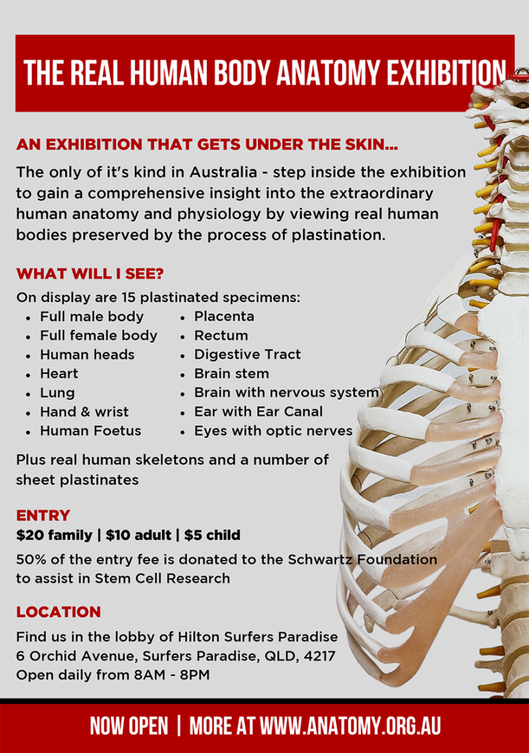 human anatomy exhibition flyer